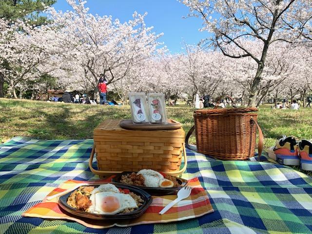 片道1時間半ドライブと「ピクニックのすすめ」海の中道海浜公園